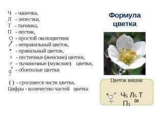 Ч - чашечка,Л - лепестки,Т - тычинка,П - пестик, О - простой околоцветник - непр