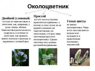 Двойной (сложный) состоит из чашелистиков и лепестков, как, например, у розы, пи