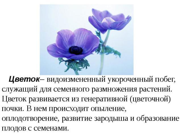 Цветок– видоизмененный укороченный побег, служащий для семенного размножения растений. Цветок развивается из генеративной (цветочной) почки. В нем происходит опыление, оплодотворение, развитие зародыша и образование плодов с семенами.