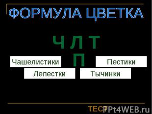 Ч Л Т ПФОРМУЛА ЦВЕТКАЧашелистикиЛепесткиТычинкиПестики