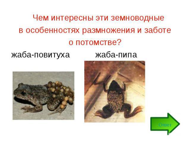 Чем интересны эти земноводные в особенностях размножения и заботе о потомстве?жаба-повитуха жаба-пипа