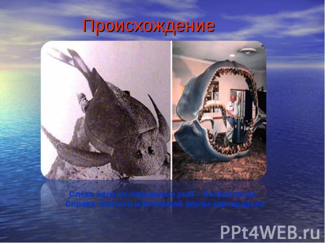 ПроисхождениеСлева одна из панцирных рыб – ботриолепис. Справа челюсти ископаемой акулы-кархарадона