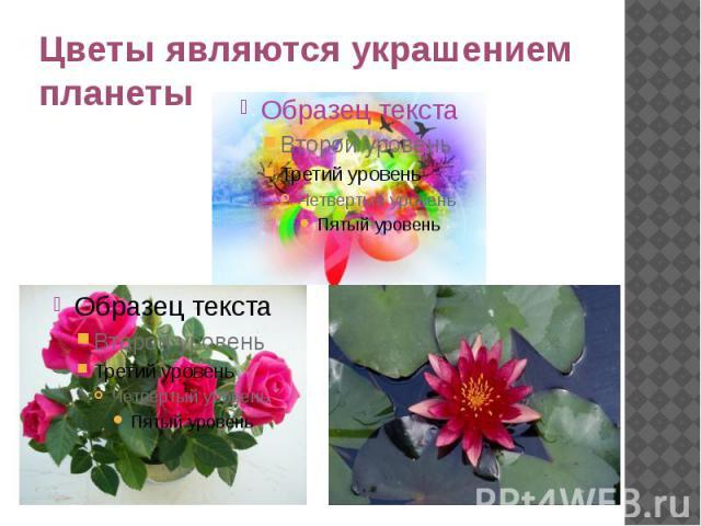 Цветы являются украшениемпланеты