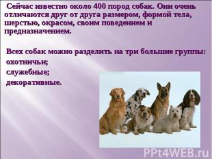 Сейчас известно около 400 пород собак. Они очень отличаются друг от друга размер