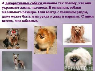 А декоративные собаки названы так потому, что они украшают жизнь человека. В осн