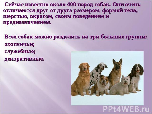Сейчас известно около 400 пород собак. Они очень отличаются друг от друга размером, формой тела, шерстью, окрасом, своим поведением и предназначением.Всех собак можно разделить на три большие группы: охотничьи;служебные;декоративные.
