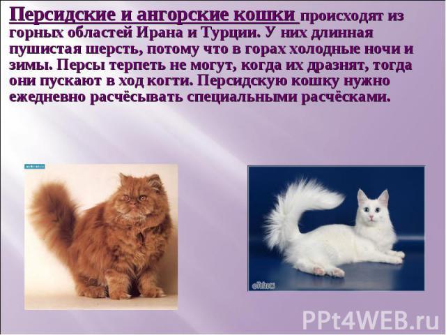 Персидские и ангорские кошки происходят из горных областей Ирана и Турции. У них длинная пушистая шерсть, потому что в горах холодные ночи и зимы. Персы терпеть не могут, когда их дразнят, тогда они пускают в ход когти. Персидскую кошку нужно ежедне…