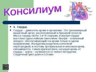 4. Сердце.Сердце – двигатель крови в организме. Это трехкамерный мышечный орган,