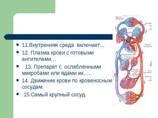11.Внутренняя среда включает...12. Плазма крови с готовыми антителами… 13. Препа