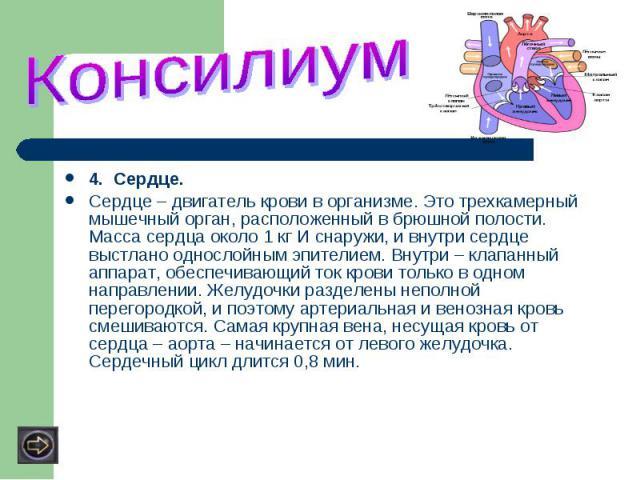 4. Сердце.Сердце – двигатель крови в организме. Это трехкамерный мышечный орган, расположенный в брюшной полости. Масса сердца около 1 кг И снаружи, и внутри сердце выстлано однослойным эпителием. Внутри – клапанный аппарат, обеспечивающий ток крови…