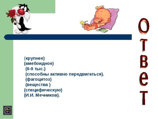 (крупнее) (амебоидное) (6-9 тыс.) (способны активно передвигаться). (фагоцитоз) (вещества )(специфическую) (И.И. Мечников).