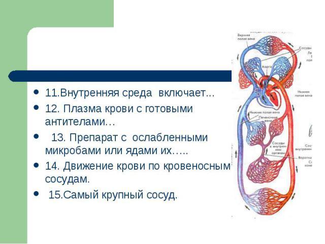 11.Внутренняя среда включает...12. Плазма крови с готовыми антителами… 13. Препарат с ослабленными микробами или ядами их…..14. Движение крови по кровеносным сосудам. 15.Самый крупный сосуд.