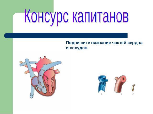 Консурс капитановПодпишите название частей сердца и сосудов.