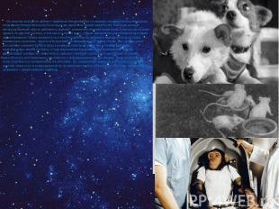 На участках выхода на орбиту у животных обнаруживалось ускорение учащения пульса