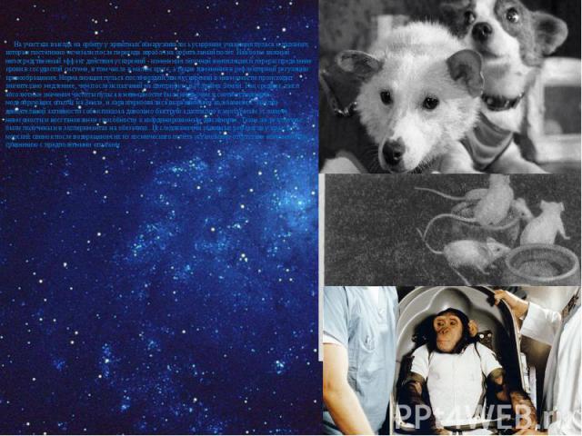 На участках выхода на орбиту у животных обнаруживалось ускорение учащения пульса и дыхания, которые постепенно исчезали после перехода корабля на орбитальный полёт. Наиболее важный непосредственный эффект действия ускорений - изменения лёгочной вент…