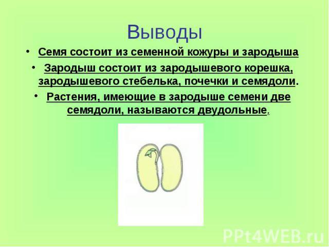 ВыводыСемя состоит из семенной кожуры и зародышаЗародыш состоит из зародышевого корешка, зародышевого стебелька, почечки и семядоли.Растения, имеющие в зародыше семени две семядоли, называются двудольные.