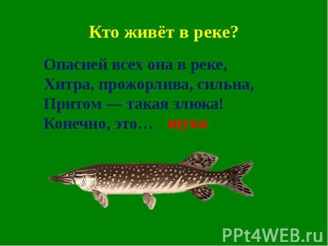 Кто живёт в реке?Опасней всех она в реке,Хитра, прожорлива, сильна,Притом — такая злюка!Конечно, это…