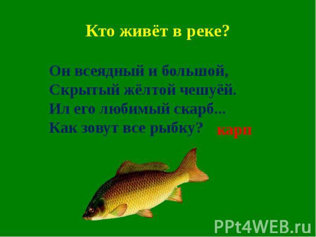 Кто живёт в реке?Он всеядный и большой,Скрытый жёлтой чешуёй.Ил его любимый скарб...Как зовут все рыбку?