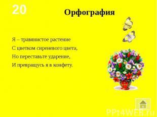 ОрфографияЯ – травянистое растениеС цветком сиреневого цвета,Но переставьте удар