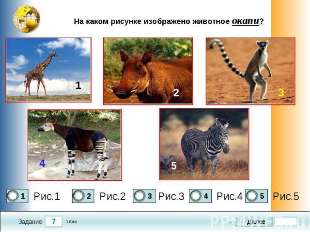 На каком рисунке изображено животное окапи?