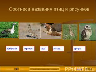 Соотнеси названия птиц и рисунков