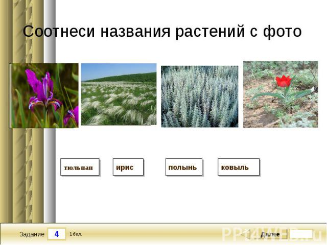Соотнеси названия растений с фото