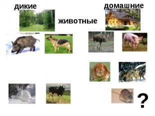 дикие животныедомашние