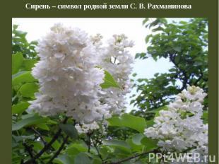 Сирень – символ родной земли С. В. Рахманинова