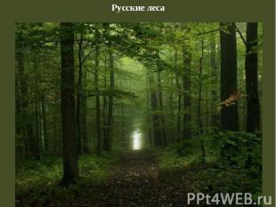 Русские леса