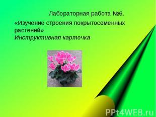 Лабораторная работа №6. «Изучение строения покрытосеменных растений» Инструктивн