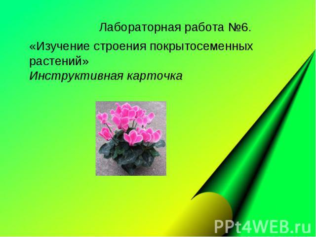 Лабораторная работа №6. «Изучение строения покрытосеменных растений» Инструктивная карточка