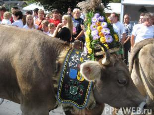 Найбільше свято навесні - проводи корів на гірські пасовища. Всім селом збирають