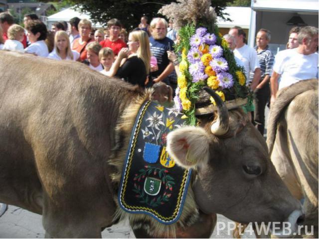 Найбільше свято навесні - проводи корів на гірські пасовища. Всім селом збираються дивитися на ошатних корів. Найбільше свято навесні - проводи корів на гірські пасовища. Всім селом збираються дивитися на ошатних корів.
