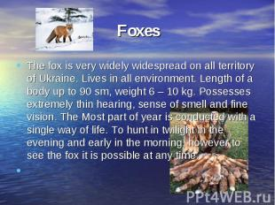 FoxesThe fox is very widely widespread on all territory of Ukraine. Lives in all