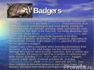 BadgersBadger is the common name for various heavily built, carnivorous, burrowi