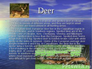 DeerThere are inhabited mostly European and spotted deer in Ukraine. They live i