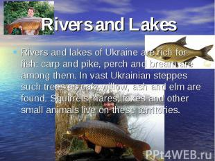 Rivers and LakesRivers and lakes of Ukraine are rich for fish: carp and pike, pe
