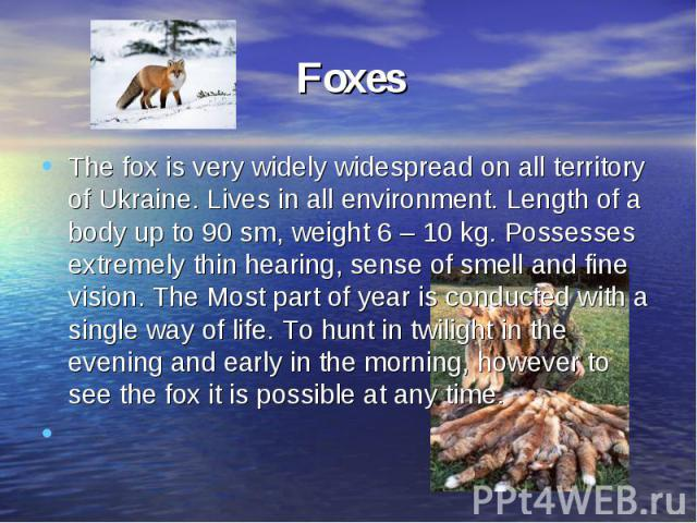 FoxesThe fox is very widely widespread on all territory of Ukraine. Lives in all environment. Length of a body up to 90 sm, weight 6 – 10 kg. Possesses extremely thin hearing, sense of smell and fine vision. The Most part of year is conducted with a…