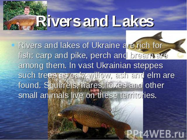 Rivers and LakesRivers and lakes of Ukraine are rich for fish: carp and pike, perch and bream are among them. In vast Ukrainian steppes such trees as oak, willow, ash and elm are found. Squirrels, hares, foxes and other small animals live on these t…
