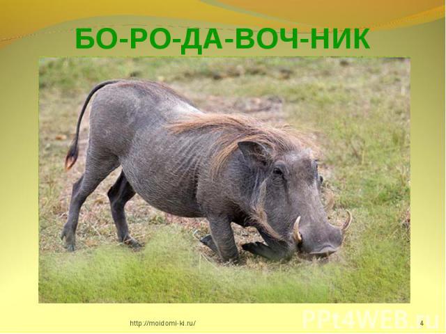 БО-РО-ДА-ВОЧ-НИК