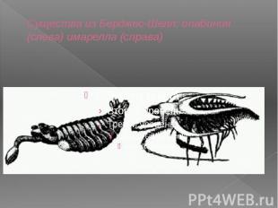 Существа из Берджес-Шелл: опабиния (слева) имарелла (справа)