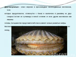 Двуство рчатые— класс морских и пресноводных малоподвижных моллюсков, тело Двуст