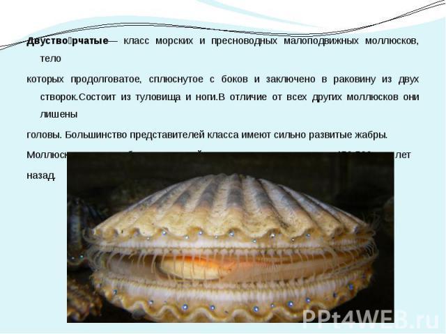 Двуство рчатые— класс морских и пресноводных малоподвижных моллюсков, тело Двуство рчатые— класс морских и пресноводных малоподвижных моллюсков, тело которых продолговатое, сплюснутое с боков и заключено в раковину из двух створок.Состоит из туловищ…