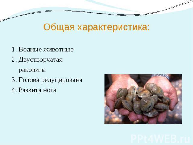 Общая характеристика: 1. Водные животные 2. Двустворчатая раковина 3. Голова редуцирована 4. Развита нога