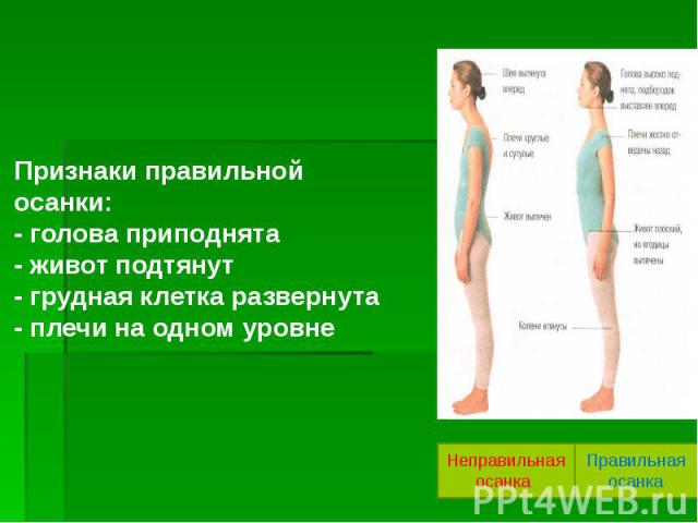 Признаки правильной осанки: - голова приподнята - живот подтянут - грудная клетка развернута - плечи на одном уровне