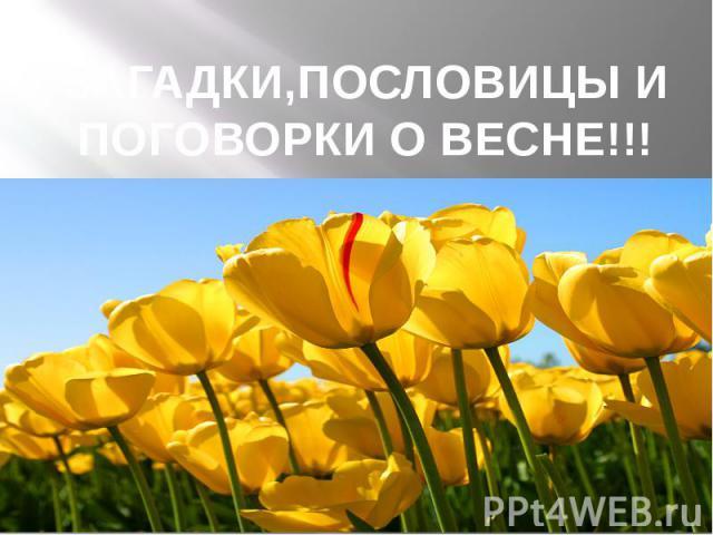 ЗАГАДКИ,ПОСЛОВИЦЫ И ПОГОВОРКИ О ВЕСНЕ!!!