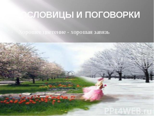 ПОСЛОВИЦЫ И ПОГОВОРКИ Хорошее цветение - хорошая завязь