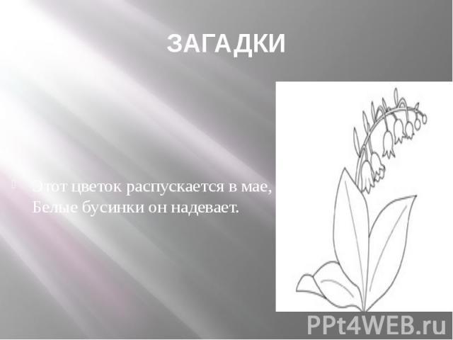 ЗАГАДКИ Этот цветок распускается в мае, Белые бусинки он надевает.
