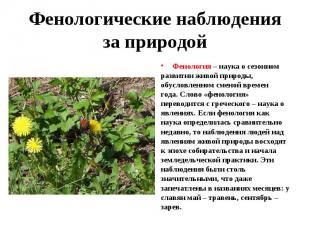 Фенология – наука о сезонном развитии живой природы, обусловленном сменой времен