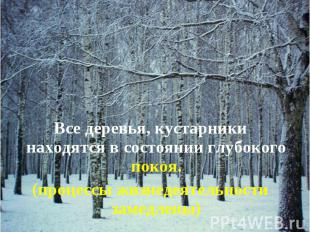 Все деревья, кустарники находятся в состоянии глубокого покоя. Все деревья, куст
